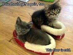 Why Are You Walking Around in Bare Feet? - LOLcats is the best place to find and submit funny cat memes and other silly cat materials to share with the world. We find the funny cats that make you LOL so that you don't have to. Cute Kittens, Cats And Kittens, Funny Animal Pictures, Cute Funny Animals, Funny Cats, Funny Humor, Animal Pics, Crazy Cat Lady, Crazy Cats