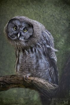 Incredibly Expressive Owl Photography - My Modern Metropolis