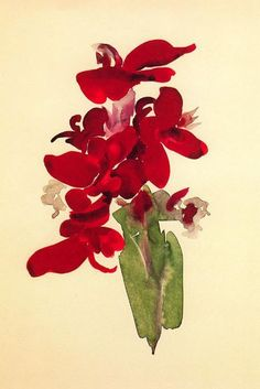 From Yale University Art Gallery, Georgia O'Keeffe, Red Canna Watercolor, 19 × 13 in Art Floral, Georgia Okeefe, Wisconsin, Georgia O Keeffe Paintings, Women Artist, Illustration Art, Illustrations, Wow Art, Art Plastique