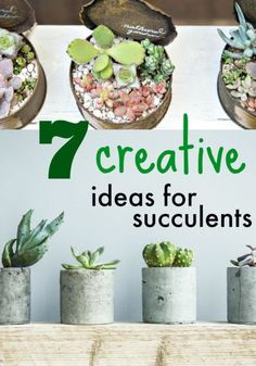 Succulents are having a moment in home decor and gardening, in part because they are so easy to tend to, but mostly because of their striking shapes and colors. Here are some creative ideas for using succulents...