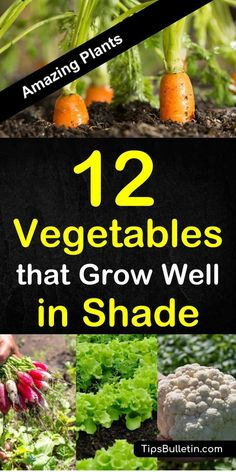 Discover 12 amazing vegetables that grow well in shade. The perfect veggies and herbs for any yard or raised beds planting in spring or summer. The ideal garden plants for low sunlight or shadow areas. planting 12 Amazing Vegetables that Grow in Shade Raised Vegetable Gardens, Home Vegetable Garden, Vegetable Bed, Veggie Gardens, Plants For Raised Beds, Raised Garden Beds, Organic Gardening, Gardening Tips, Gardening Courses