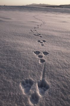 Tracks                                                   by Kent Shiraishi
