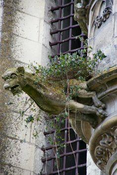 Végétation inattendue Cest impressionnant de voir comment la végétation arrive à pousser même sur cette gargouille, pourtant située bien en hauteur ! Amboise, Indre et Loire (37)