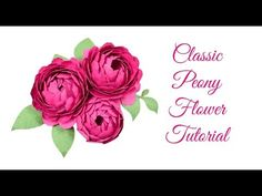 Peony Paper Flower Template: Step by Step Easy Paper Flower Tutorial. The perfect DIY craft to give your home, party, or office the touch of beauty you're looking for! Giant Paper Flowers, Large Flowers, Diy Flowers, Pretty Flowers, Handmade Flowers, Papier Diy, Paper Peonies, Paper Crafts, Diy Crafts