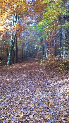 Herbstspaziergang durch den Pfälzer Wald am Ungeheuer-See.