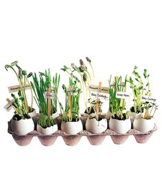 To start an herb garden, start seedlings in eggshells. Then, when it warms up,  plant the whole thing in your garden.
