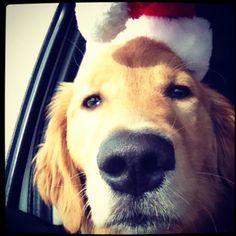 Santa dog :)