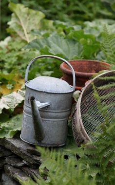 Country Green and Gray in the Garden with Watering Can