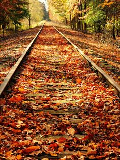 Leaf covered Railroad Tracks