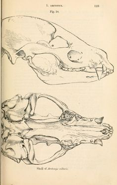 Catalogue of carnivorous, pachydermatous and ed...