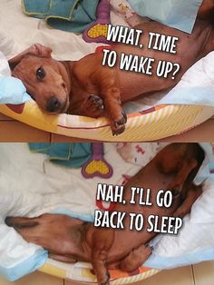 Hahaha Grace does this! She is too funny:) my dog sleeps in and gets up when she is ready ! Love my Grace❤️