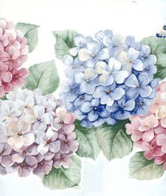 I LOVE hydrangeas. I will be planting then by my front steps. Botanical Illustration, Botanical Prints, Vintage Flowers, Vintage Floral, Watercolor Flowers, Watercolor Paintings, Hydrangea Flower, Hydrangeas, Decoupage Paper