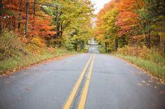 Autumn, Fall, Road, Yellow, Nature