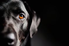 © Emilee Fuss Photography | Daily Dog Tag | Black #Labrador  Retriever, professional pet photography