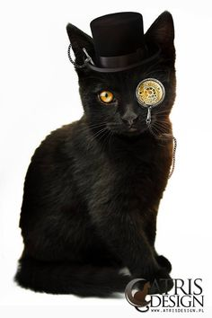 Cats For Adoption Code: 5137297197 Chat Steampunk, Steampunk Kunst, Steampunk Design, I Love Cats, Crazy Cats, Cool Cats, Steampunk Animals, Gatos Cats, Mundo Animal