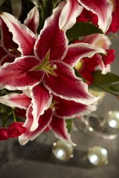 """How to make your Lilies OPEN UP FASTER.   1.Take the bunch and cut it using a bunch cutter or flower knife.  2. Then LAY the bunch on a table at room temperature after cutting... (NOT IN WATER)  3. Allow the Lilies to set out of water for 2-3 hours.  4. Then Re-cut the stems and place into  Chrysal Bulb Formula Flower Food...  (use Cold Water... about 35-40 degrees F)...This will cause the Buds to open far quicker than normal processing!  Get more tips via """"Flower Thoughts by J"""" ubloom.com"""