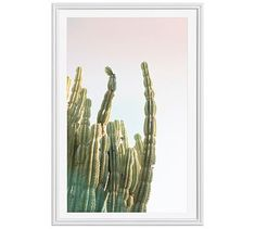 "Bright Cactus Framed Print by Jane Wilder, 28 x 42"", Ridged Distressed Frame, White, Mat"
