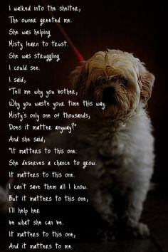 A shelter dog's poem | Dogs (and a few others)/Rescues ...