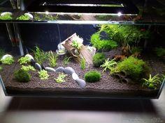 30 Best Ideas Aquarium Designs in The Living Room - Pandriva - fresh water fish tank Planted Aquarium, Aquarium Terrarium, Aquarium Setup, Betta Fish Tank, Home Aquarium, Nature Aquarium, Aquarium Design, Saltwater Aquarium, Aquarium Fish Tank