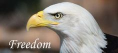 """BoOmers 