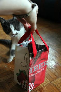 make a gift bag from an annoying flyer