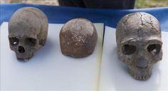 """Agencia EFE - Vista del cráneo encontrado de un Homo Sapiens (c), colocado entre el de un Neanderthal (i) y el cráneo completo de la misma especie (d), expuestos en la cueva de Manot, en Galilea Occidental, Israel, hoy, miércoles 28 de enero de 2015. El cráneo central, que data de hace 55.000 años, sugiere que pudieron pasar por allí los primeros Homo Sapiens que más tarde colonizaron Europa, según ha publicado la revista británica """"Nature""""."""
