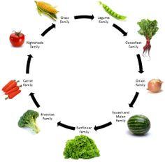 Crop Circles -crop rotation