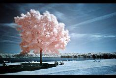 Compilation de 25 Photographies infrarouges | Ma Revue Web