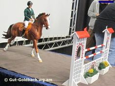 News from the Show Ring
