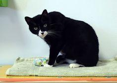 Animal Shelter Volunteer Life: (Almost) Wordless Wednesday - Figaro!