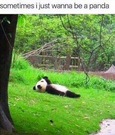 Sometimes I just wanna be a panda.