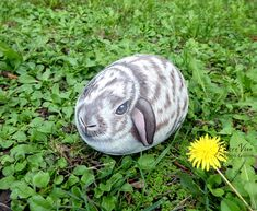 Zoe a lop eared rabbit painted on rock by Ernestina Gallina, Stone painting art