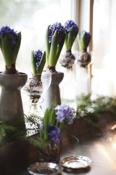 Nothing spreads the Christmas cheer like decorating with greenery. In my house Hyacinths and Amaryllis where Christmas staples, and the smel. Spring Bulbs, Spring Sign, Daffodils, Spring Flowers, Winter Flowers, Spring Blooms, Garden Inspiration, Design Inspiration, Houseplants