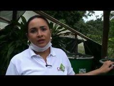 curso teorico practico cultivo hongos YouTube