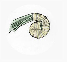 Starting Pine Needle basket w/o a walnut