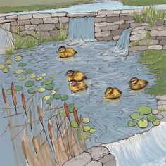 Hand Illustration, Biodegradable Products, Pond, Recycling, Wildlife, The Originals, Prints, Greeting Cards, Water Pond