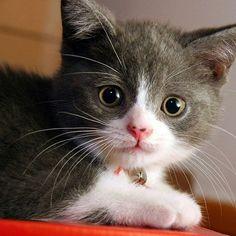 #kitty #catlover #cat #kitten