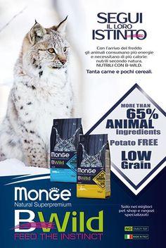 Monge BWild - Cat