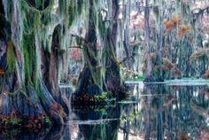 """lago-caddo  Un laberinto de árboles altos, mucha humedad, y un ambiente """"fantasmal"""". Así son los alrededores del lago Caddo, un sitio con varios pantanos y cenagales, que forman un total 33.000 hectáreas de agua al sur de Estados Unidos, en la frontera entre Texas y Luisiana."""