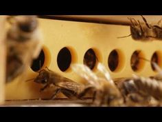 A new way of protecting bees against varroa mites   Bee Care