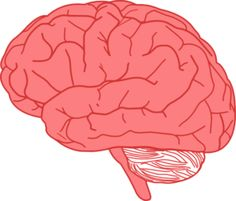 homosexual brain study    http://abcnews.go.com/Technology/story?id=5176866&page=1