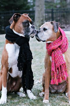 gotta stay warm/ The Boxer Rescue, Inc.