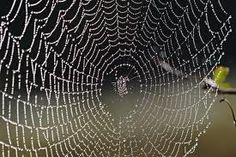 spiders webs in the rain - Google Search