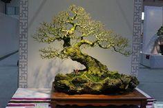 Bonsai 833