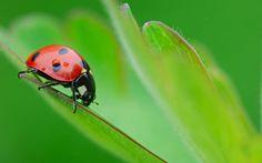 Entre os insetos que podem existir num jardim ou numa horta, alguns são bastante…