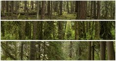 nevver: Into the woods, Doug Eng