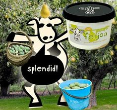 backyard feijoa stash starting to dry up? well no fear, just when it was starting to feel like things were going a bit pear-shaped, look who's gonna hit the market late next week… no bull! #limitedseason  #pear+feijoa