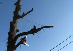 abattage-arbre