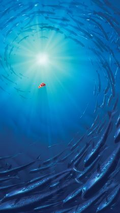 "Wallpaper for ""Finding Nemo"" Finding Nemo Poster, Finding Nemo Movie, Finding Nemo 2003, Movie Wallpapers, Cute Wallpapers, Disney Art, Disney Pixar, Disney Wallpaper, Iphone Wallpaper"
