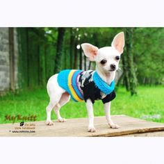 Designer dog knit sweater handmade by Myknitt #handmade #myknitt #designerdog #designerpet #knit #fashion #chihuahua #cutedog #puppy
